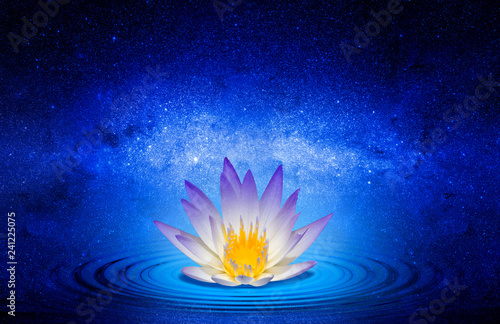 Garden Poster Lotus flower Buddhist lotus flower