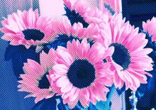 Pink And Blue Alternative Sunf...
