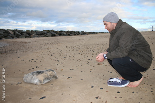 фотография Close up of man and seal, friendly Winter rescue encounter on beach with baby gr