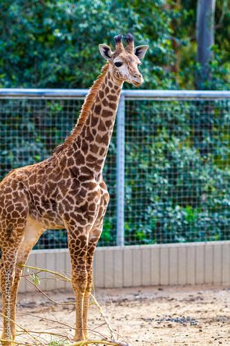 Photo  San Diego Zoo