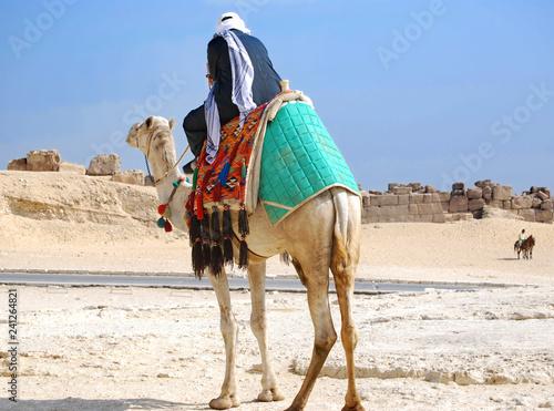 Obraz na plátne Camel driver in Giza, in Cairo, Egypt