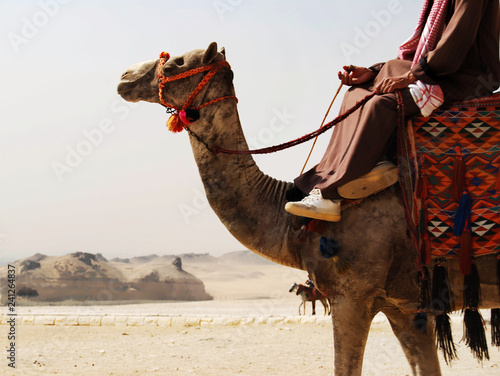 Valokuvatapetti Camel driver in the desert of Sahara, Egypt