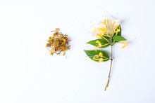 Honeysuckle/Chinese Herbal Tea Flower Background Material On White Background