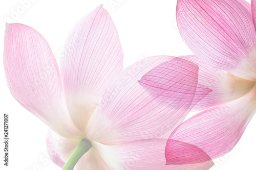 Photo Stands Lotus flower Lotus on white background