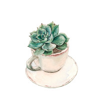 Succulent Grows In A Tea Cup With A Saucer , Watercolor