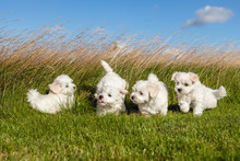 Dog Puppies In The Grass