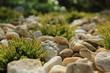 Wrzosy między kamieniami