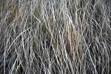 Dry Gray Grass, Hay, Natural Organic Background, Close Up Horizontal Macro Detail