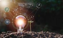 Energy Saving Light Bulb And T...
