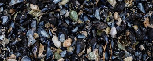 Miesmuscheln am Strand