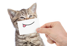 Cat With Funny Tongue Smile Is...