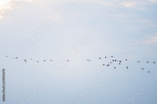 Recess Fitting Bird Flying Flamingos on the sky background