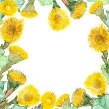 Bright Frame With Large Yellow Flowers Healing Plant Mother-stepmother And Leaves. Spring Watercolor Banner With A Bright Print