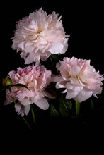 Photo Pink Flowers