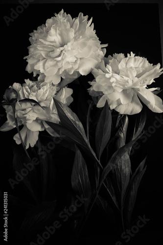 Foto-Lamellenvorhang - Photo white flowers peonies (von Larisa Siverina)