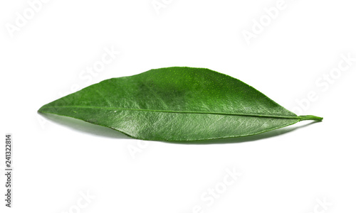Fresh green tangerine leaf on white background