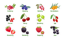 Set Of Berries Isolated On White Background. Raspberry, Blackberry, Strawberry, Gooseberry, Cherry, Currant, Sea Buckthorn, Blueberry, Cranberry, Acai, Goji, Barberry. Vector Flat Illustration.