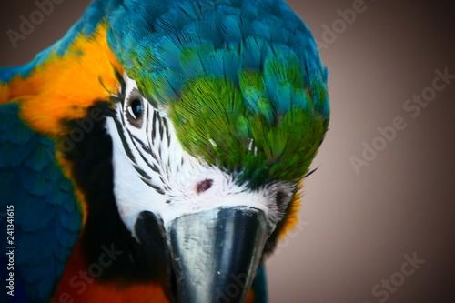 Foto auf Gartenposter Papageien Pappegaai papegaai Ara geel bauw