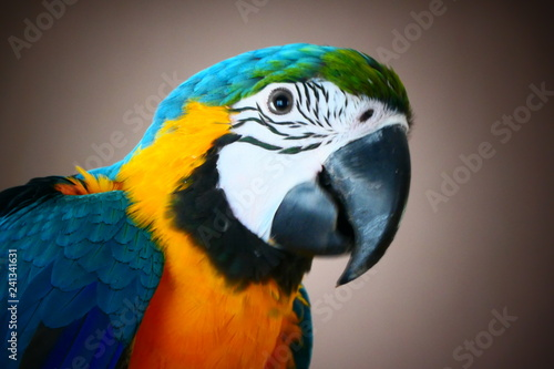 Ingelijste posters Papegaai Pappegaai papegaai Ara geel bauw