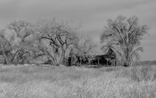 Broken Down Old Barn Surrounded By Bare Trees During The Winter In Monochrome.