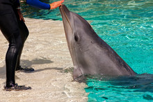 Dolphin And Trainer.