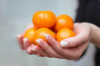 A woman holds in her hand the orange fruits of mandarin_