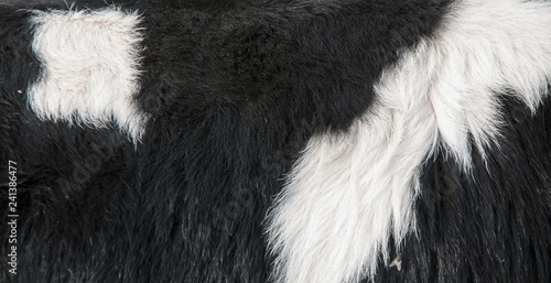 Photo  background of fur