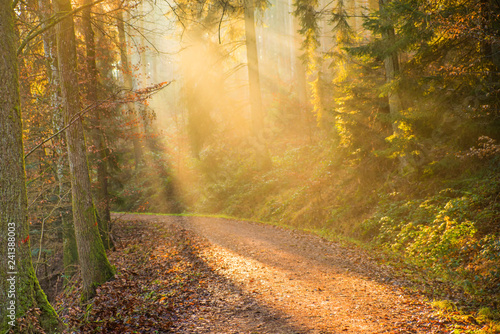 Foto op Canvas Weg in bos sun rays in a forest