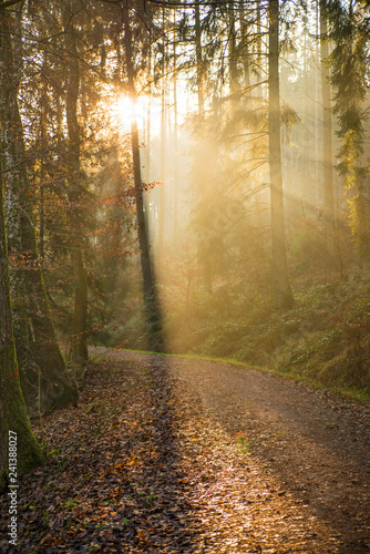 Fotobehang Natuur sun rays in a forest