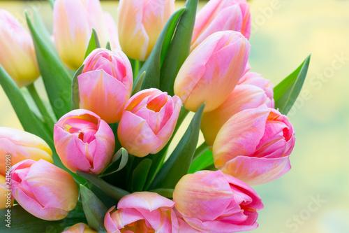 Spring flowers. Living cora...