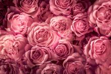 Rosen In Pink, Hintergrund