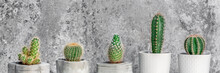 Collection Of Various Cactus Plants In Different Pots. Potted Cactus House Plants Against Stone Industrial Wall. Panoramic Copy Space.