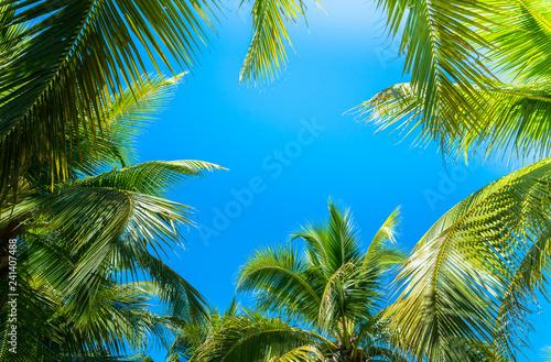 Montage in der Fensternische Palms Coconut Palm tree with blue sky.