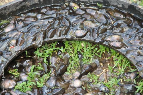 Fotografia, Obraz  Tedpoles in water and on grass. Small amphibians