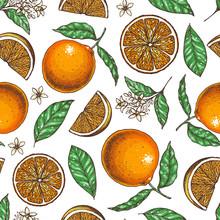Orange Seamless Pattern. Fresh Citrus Background. Hand Drawn Vector Illustration. Organic Food, Citrus Design Template. Colored Illustration