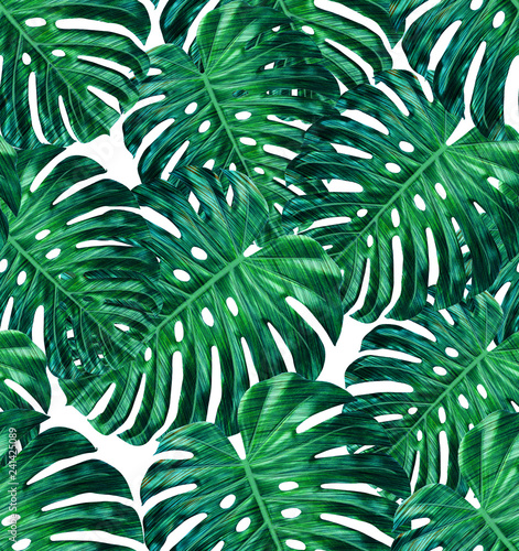 Fototapeta Tropical leaf design featuring green monstera plant leaves on a white background. Seamless vector repeating pattern.  obraz na płótnie