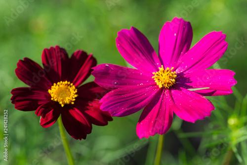 Fototapeta pink red flower obraz na płótnie