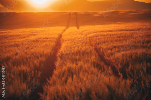 Morning nature with golden wheat and vivid background. In the background is church, village and hills covered by clouds. Nice spring wallpaper