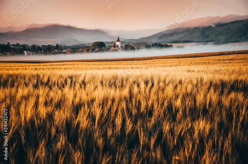 ranek-krajobraz-nad-wioska-z-lakami-i-drzewami-zakrywajacymi-ranek-mgla-i-pieknym-wschodu-slonca-swiatlem