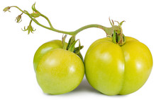 Two Green Tomatoes Isolated