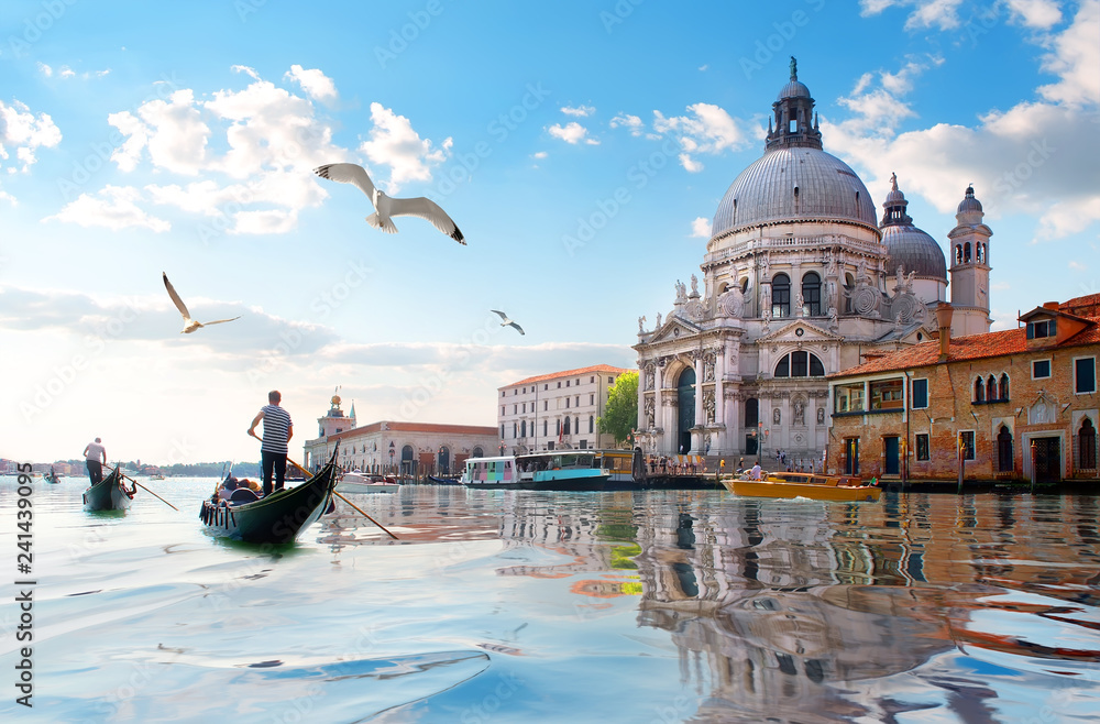 Fototapety, obrazy: Seagulls and Grand Canal