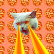 canvas print picture  Pizza addict Cat with lasers from eyes. Animal fun collage art