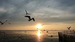 Beautiful sunrise over the ocean with flying seagull birds