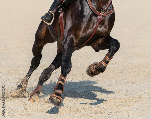 Close up image of legs of running bay sport horse.