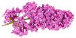 lilac purple white background