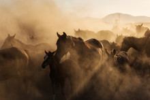 Landscape Of Wild Horses Runni...