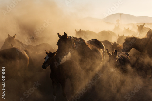 Landscape of wild horses running at sunset with dust in background.