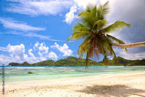 Zdjęcie XXL Tropikalna palma plaża z białym piaskiem, Seychelles
