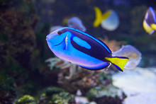 Colorful Pallets Doctor Fish I...