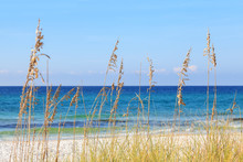Gulf Of Mexico Ocean And Blue Sky In The Background With Tall Grasses In The Foreground